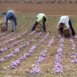 spain workers