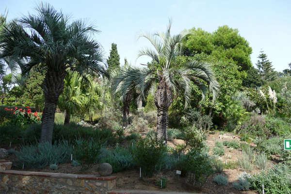 Ботанический сад Маримас в Бланосе