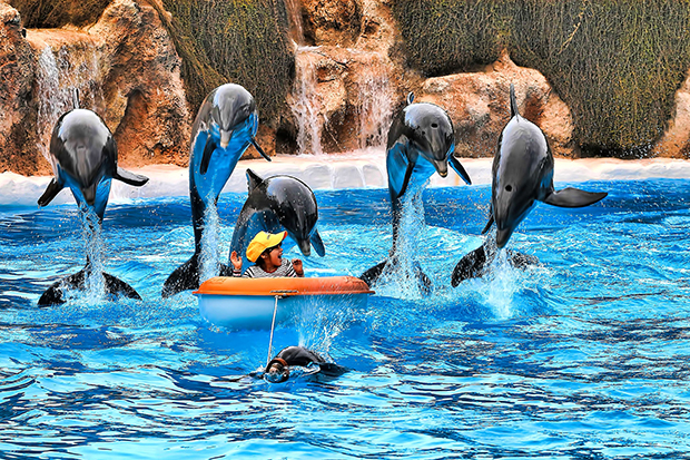 В Лоро-парке часто устраивают представления с дельфинами и касатками.