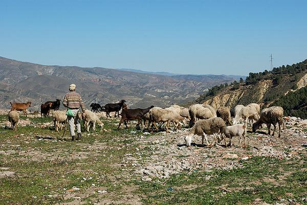Придумали это блюдо испанские пастухи.