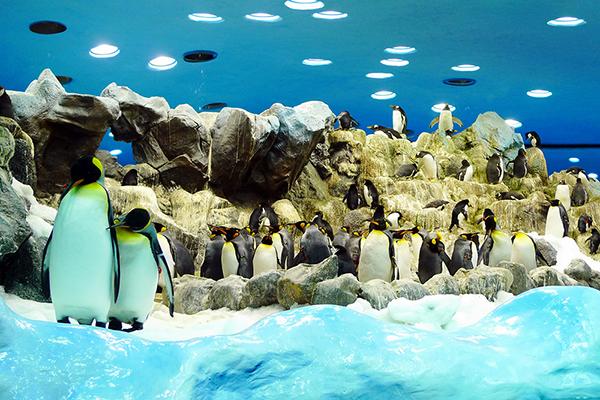 Пингвинов нельзя фотографировать со вспышкой — они пугаются.