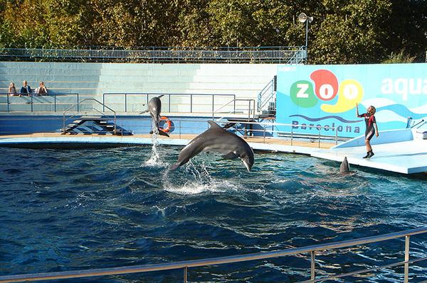 Периодически проходят развлекательные шоу с морскими котиками и дельфинами.