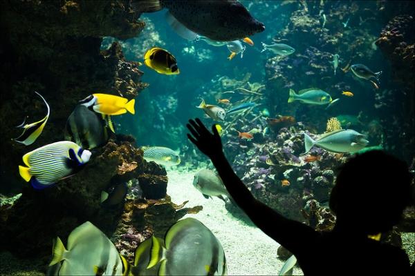 Дети под впечатлением от знакомства с подводным миром.