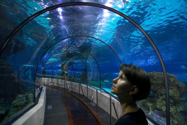 Через аквариум проходит стеклянный тоннель с движущейся дорожкой.