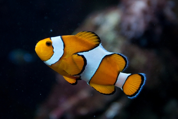 В семи тропических аквариумах можно полюбоваться яркими рыбками и кораллами.