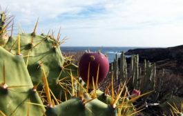 Отдых на Тенерифе в феврале — советы туристам