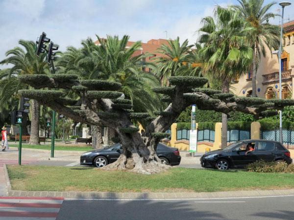 Огромное дерево.