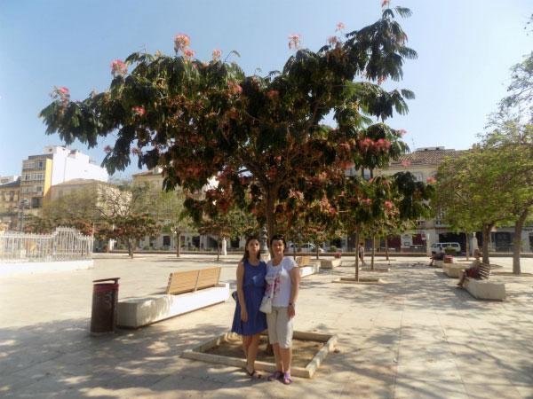 Дерево на площади.