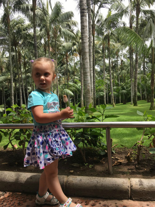 Пальмовый лес.
