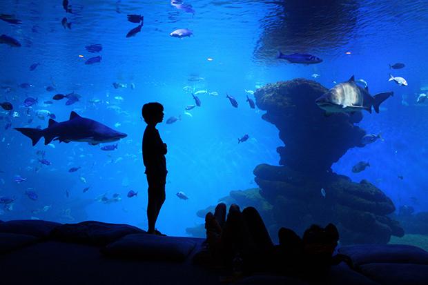 В океанариуме Пальмы есть контактный аквариум.