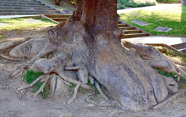 Увидели причудливые корни деревьев, напоминающие разных животных.