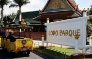 Лоро-парк на Тенерифе — руководство для туриста