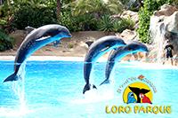 Лоро-парк — отличное место для семейного отдыха.