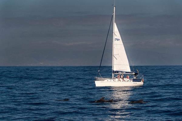 Во время морской прогулки можно увидеть китов и дельфинов.