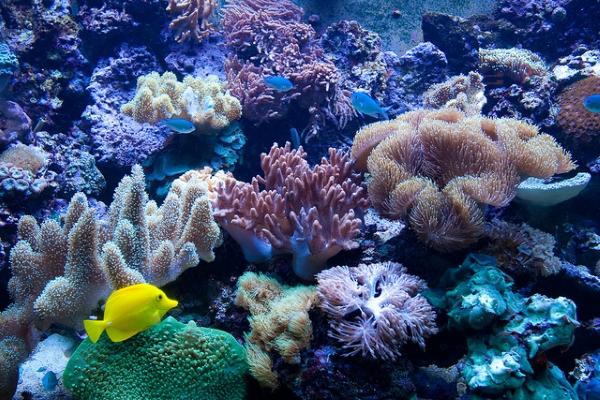 На знакомство с удивительным подводным миром лучше отвести не меньше трёх часов.