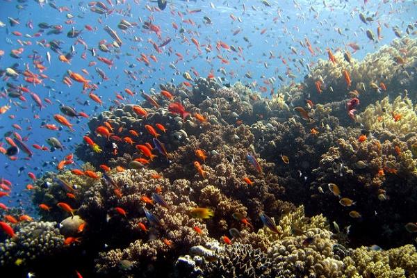 Тематические бассейны знакомят с морской флорой и фауной из разных географических регионов.