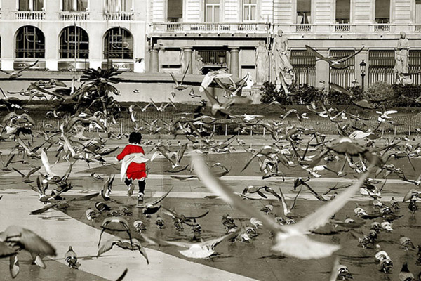 Птицы на площади.