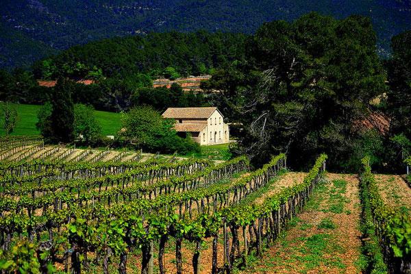 Виноградники в Испании.
