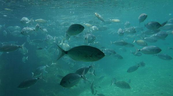 Рыбки в воде.