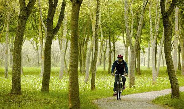 Велодорожка в парке.