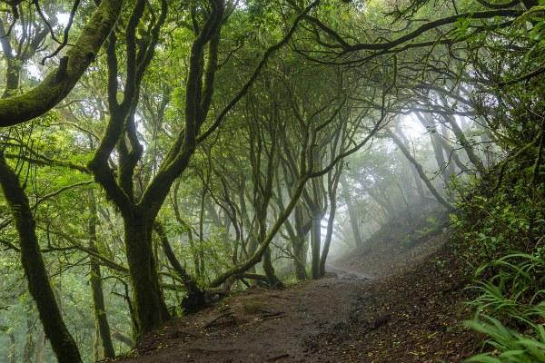 Природный парк Анага.